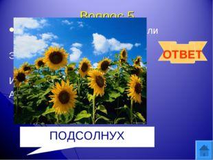 Вопрос 5 Посадили зернышко-вырастили солнышко Это солнышко сорвем, много зере