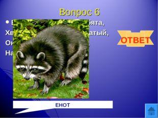 Вопрос 6 Есть такой зверек, ребята, Хвост пушистый, полосатый, Он в густом ле