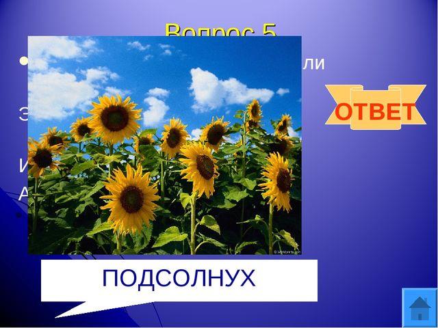 Вопрос 5 Посадили зернышко-вырастили солнышко Это солнышко сорвем, много зере...