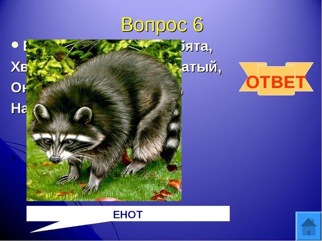 Вопрос 6 Есть такой зверек, ребята, Хвост пушистый, полосатый, Он в густом ле...