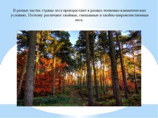 В разных частях страны леса произрастают в разных почвенно-климатических усло