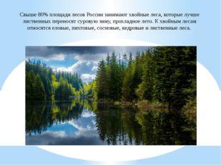 Свыше 80% площади лесов России занимают хвойные леса, которые лучше лиственны