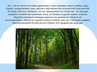 Лес - это не только источник древесины, в нем огромные запасы грибов, ягод, п