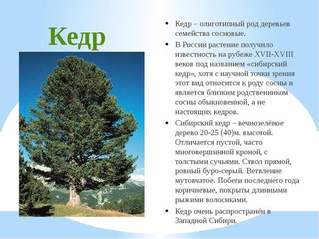 Кедр Кедр – олиготипный род деревьев семейства сосновые. В России растение по...