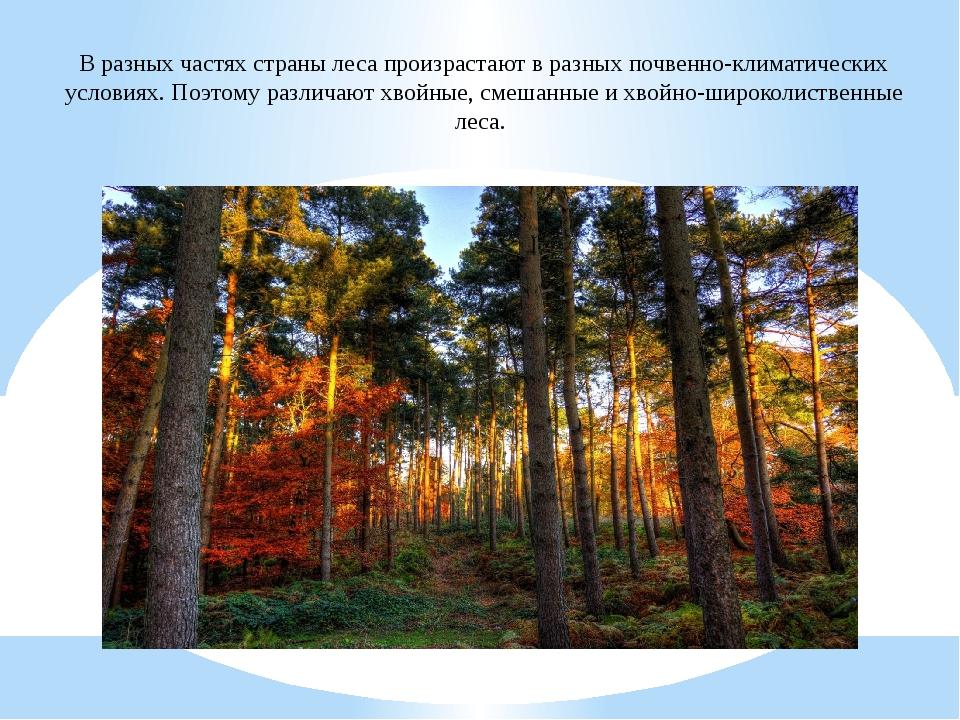 В разных частях страны леса произрастают в разных почвенно-климатических усло...