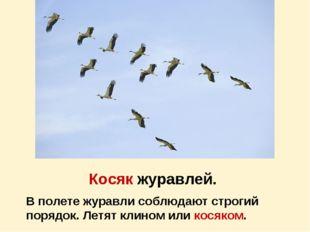 Косяк журавлей. В полете журавли соблюдают строгий порядок. Летят клином или