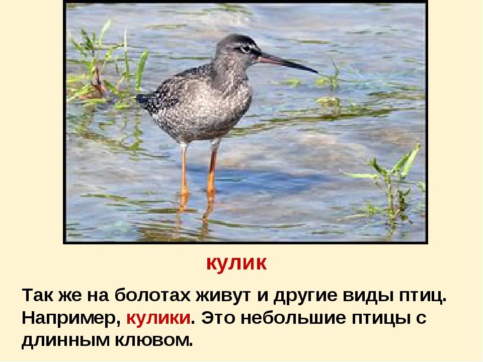 кулик Так же на болотах живут и другие виды птиц. Например, кулики. Это небол...