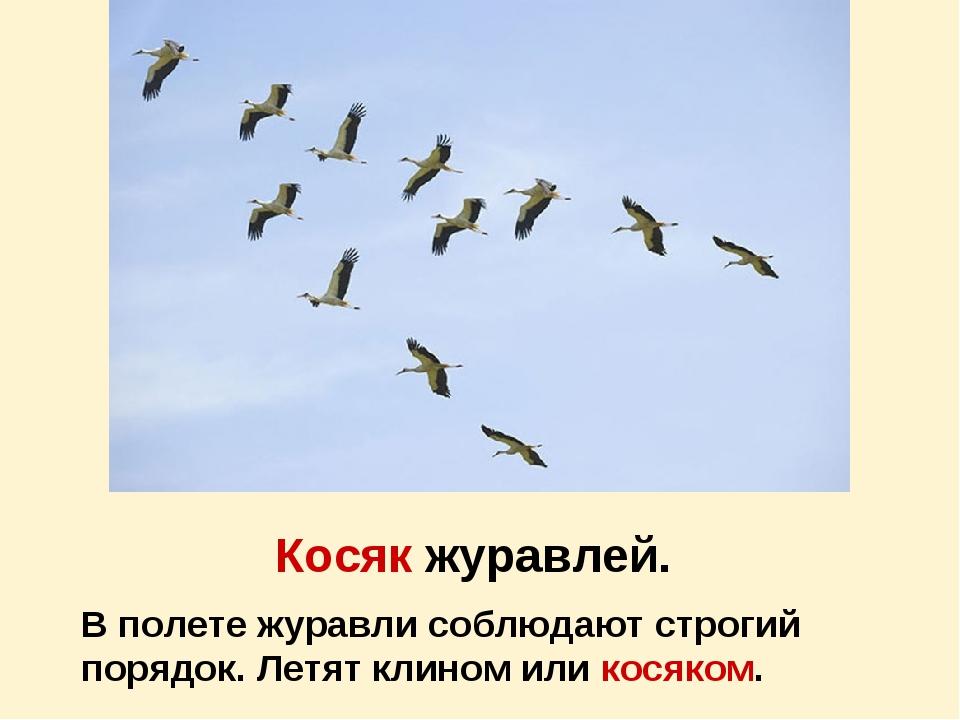 Косяк журавлей. В полете журавли соблюдают строгий порядок. Летят клином или...