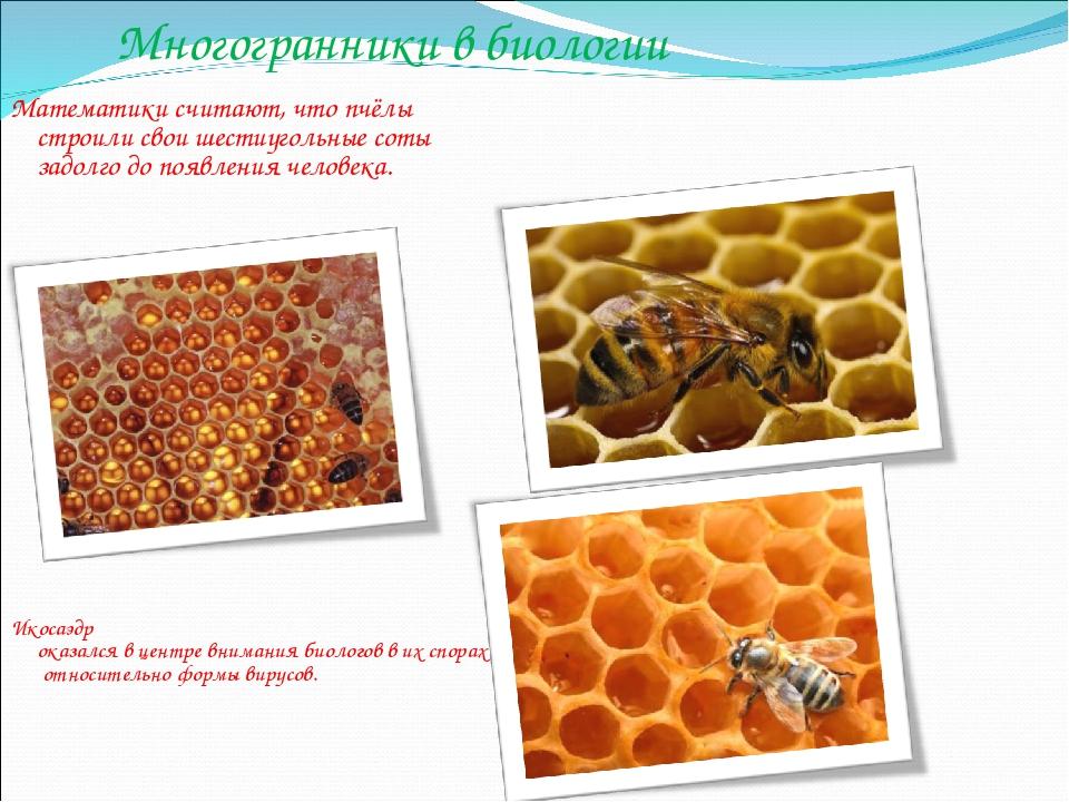 Многогранники в биологии Икосаэдр оказался в центре внимания биологов в их сп...