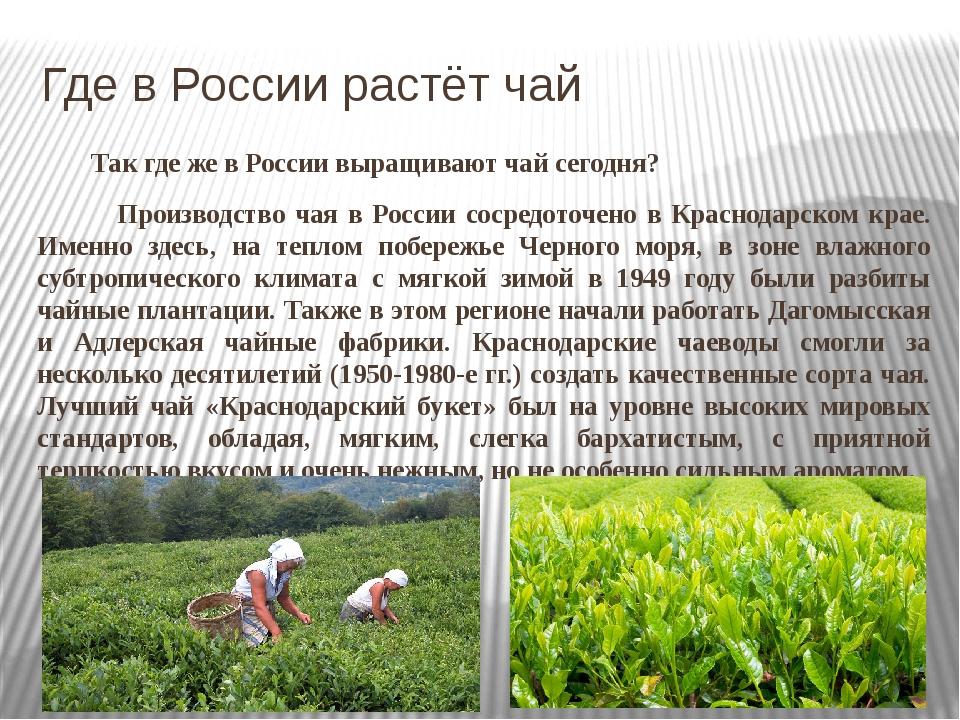 Иван чай вырастить
