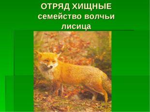 ОТРЯД ХИЩНЫЕ семейство волчьи лисица
