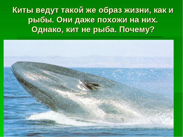 Киты ведут такой же образ жизни, как и рыбы. Они даже похожи на них. Однако,...