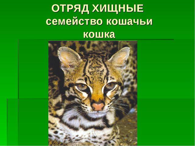 ОТРЯД ХИЩНЫЕ семейство кошачьи кошка