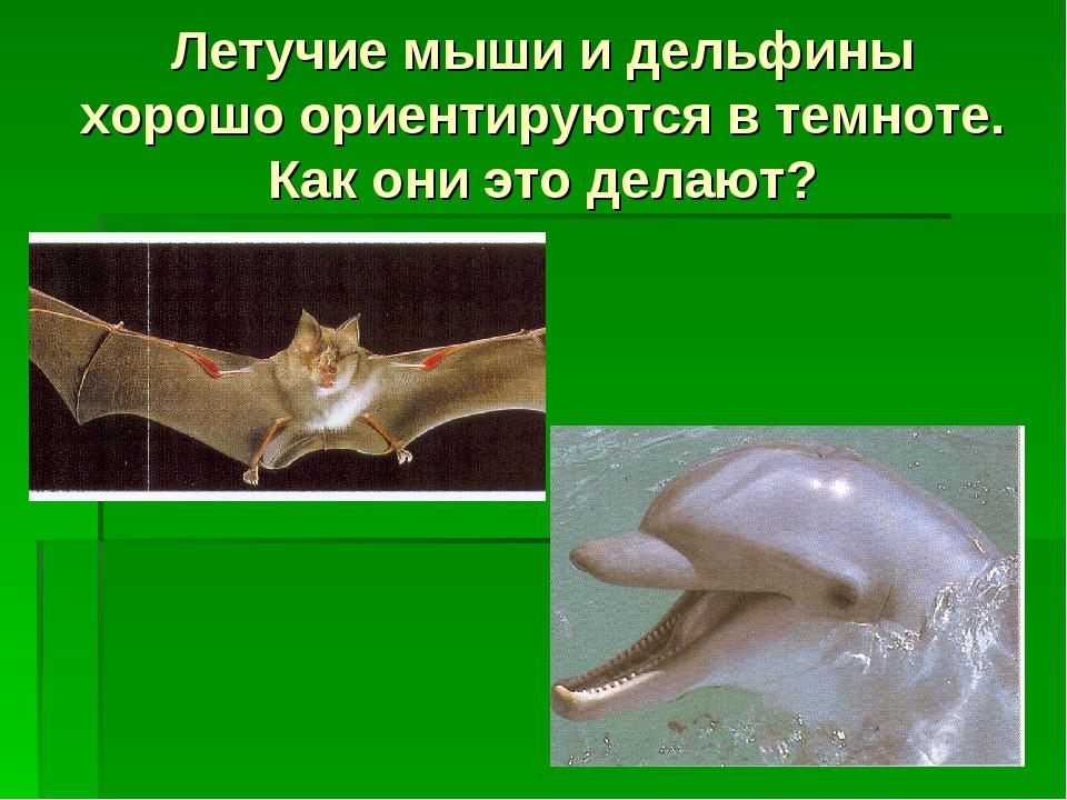 Летучие мыши и дельфины хорошо ориентируются в темноте. Как они это делают?