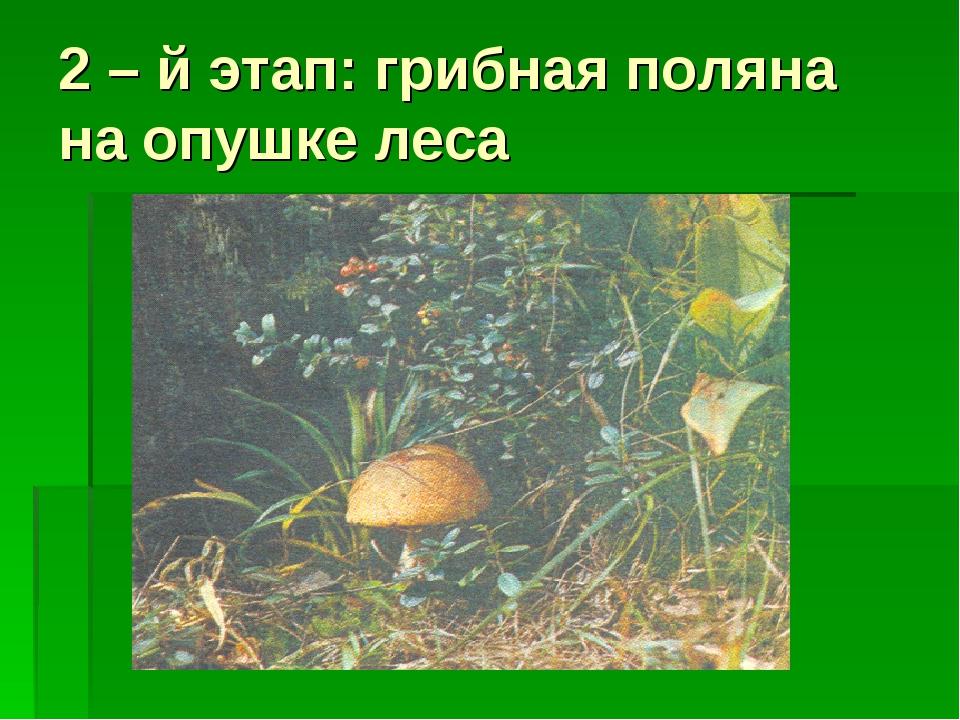 2 – й этап: грибная поляна на опушке леса