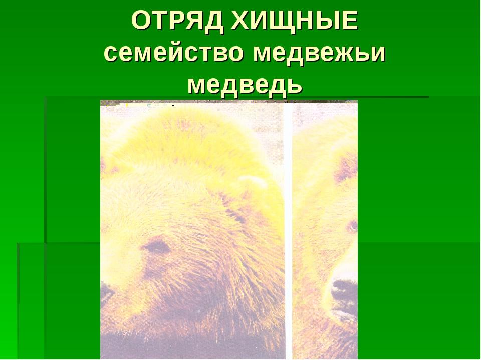 ОТРЯД ХИЩНЫЕ семейство медвежьи медведь