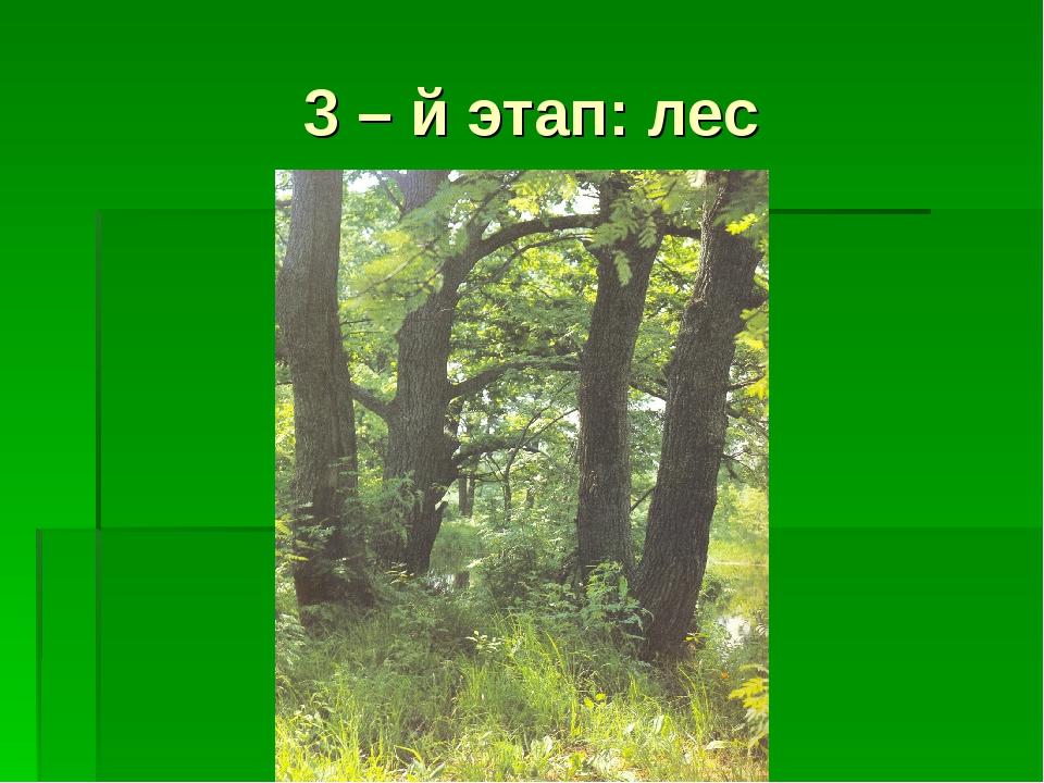 3 – й этап: лес
