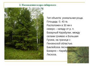 2. Насаждения кедра сибирского Тип объекта: уникальная роща. Площадь: 0, 43