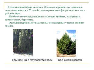 Коллекционный фонд включает 265 видов деревьев, кустарников и лиан, относящи