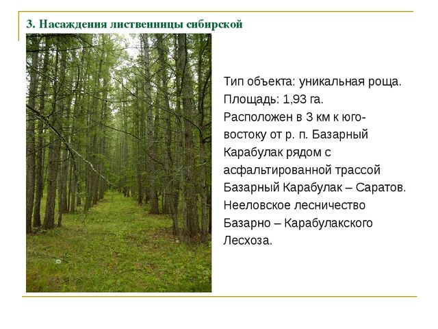 3. Насаждения лиственницы сибирской Тип объекта: уникальная роща. Площадь: 1,...
