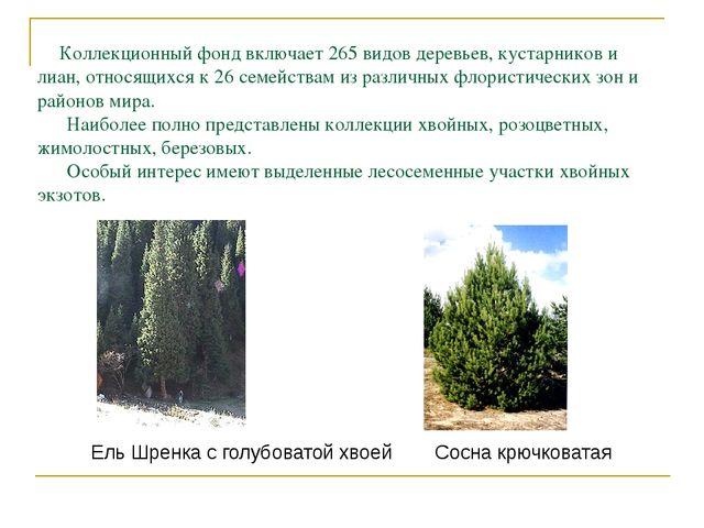 Коллекционный фонд включает 265 видов деревьев, кустарников и лиан, относящи...