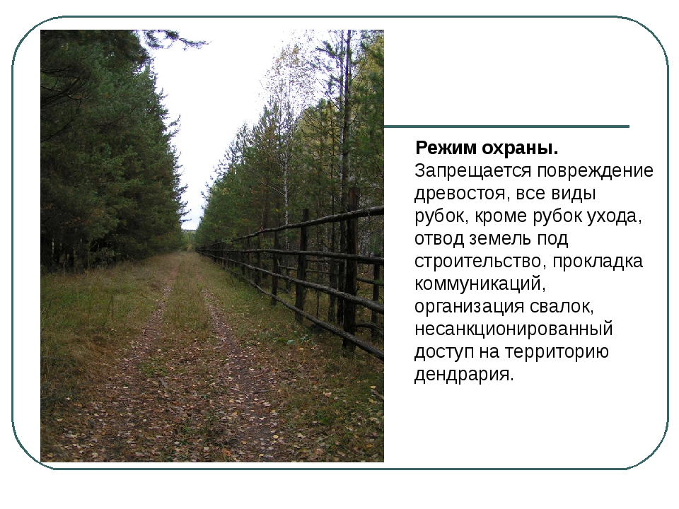 Режим охраны. Запрещается повреждение древостоя, все виды рубок, кроме рубок...
