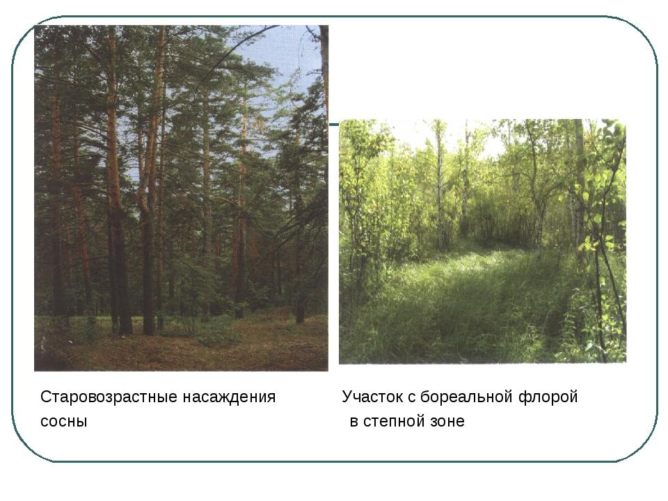 Старовозрастные насаждения Участок с бореальной флорой сосны в степной зоне