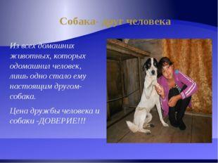 Собака- друг человека Из всех домашних животных, которых одомашнил человек, л