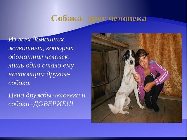 Собака- друг человека Из всех домашних животных, которых одомашнил человек, л...