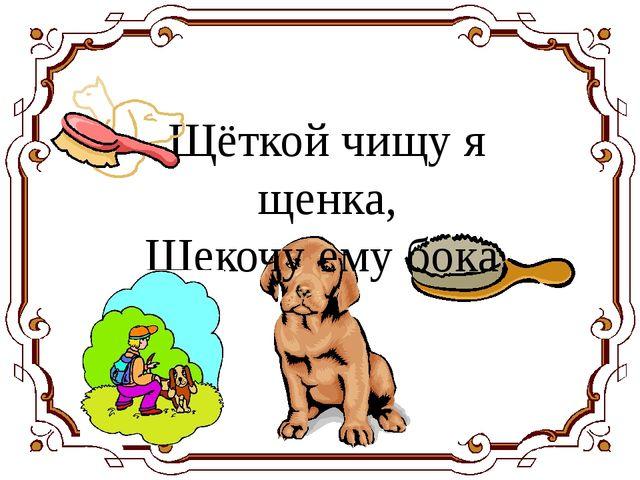 Щёткой чищу я щенка, Щекочу ему бока.