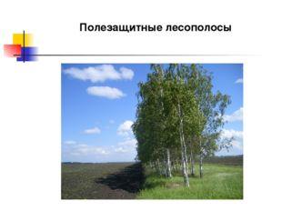 Полезащитные лесополосы