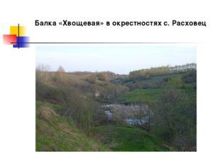 Балка «Хвощевая» в окрестностях с. Расховец