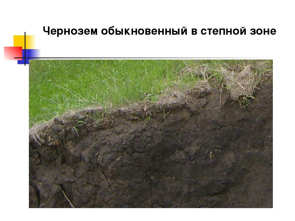 Чернозем обыкновенный в степной зоне