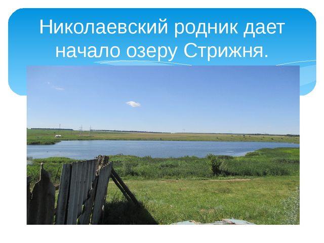 Николаевский родник дает начало озеру Стрижня.