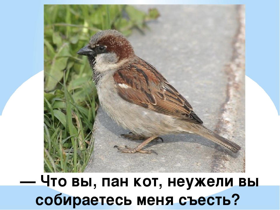 — Что вы, пан кот, неужели вы собираетесь меня съесть?