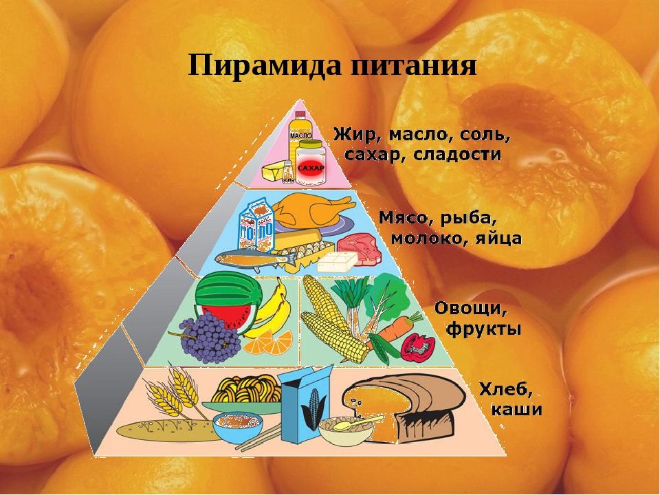 Пирамида питания