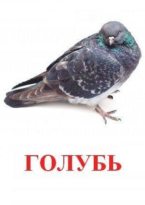 hello_html_3876969c.jpg