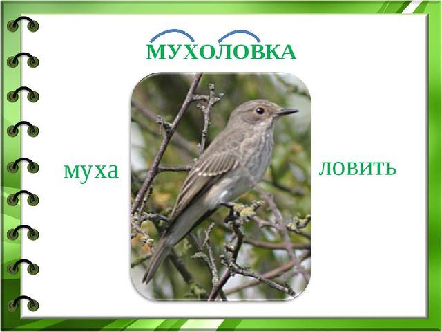 муха ловить МУХОЛОВКА