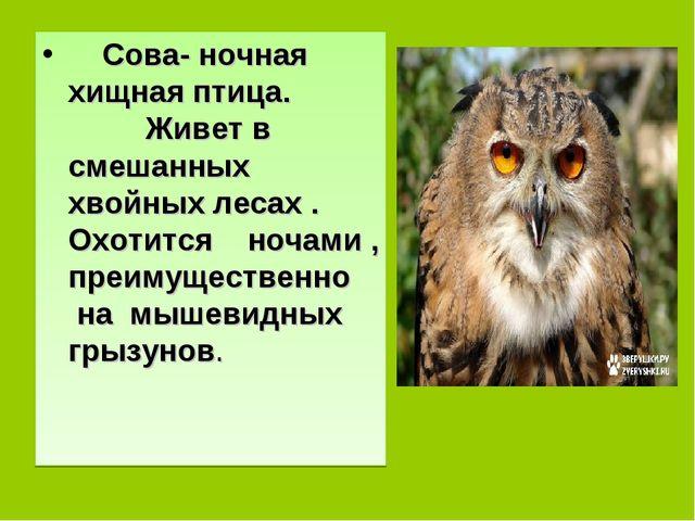 Сова- ночная хищная птица. Живет в смешанных хвойных лесах . Охотится ночами...