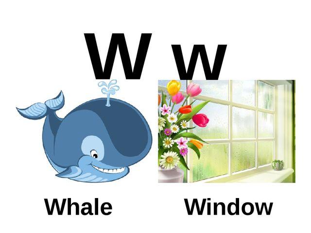 W w Whale Window
