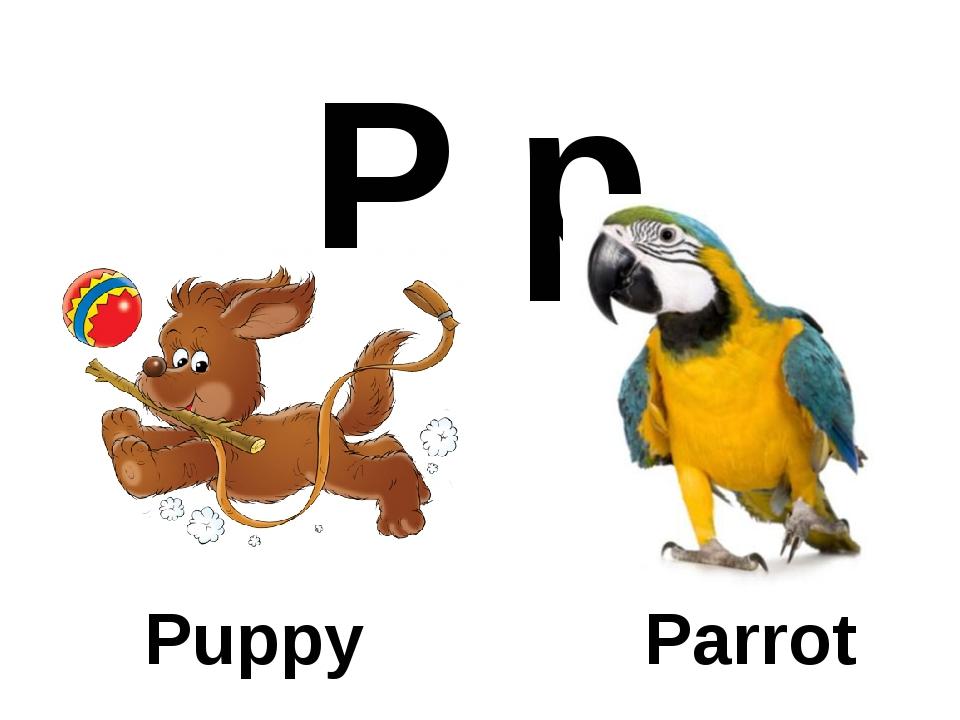 P p Puppy Parrot