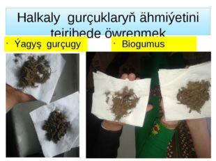 Halkaly gurçuklaryň ähmiýetini tejribede öwrenmek Ýagyş gurçugy Biogumus