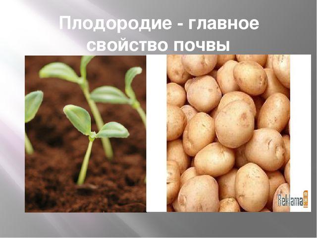 Плодородие - главное свойство почвы