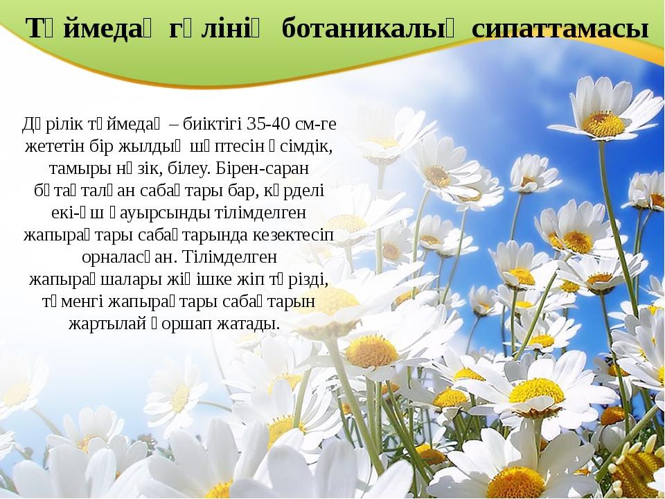 Түймедақ гүлінің ботаникалық сипаттамасы Дәрілік түймедақ – биіктігі 35-40 см...