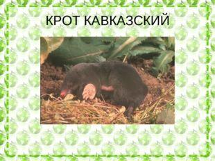 КРОТ КАВКАЗСКИЙ