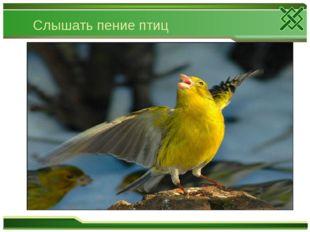Слышать пение птиц