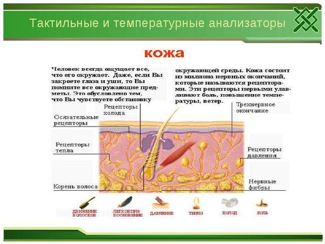 Тактильные и температурные анализаторы