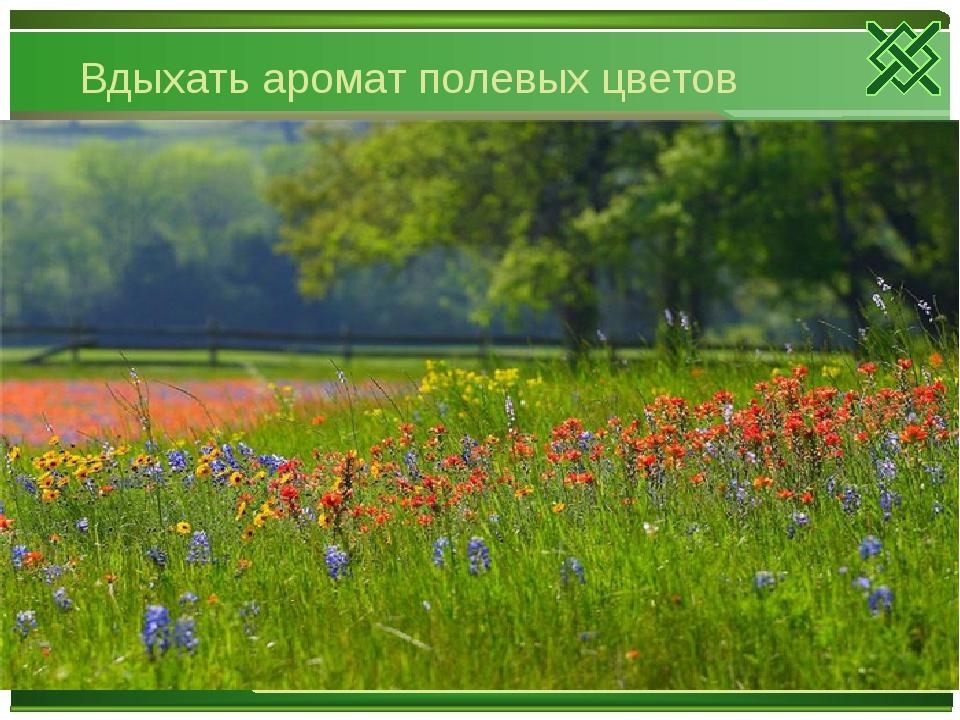 Вдыхать аромат полевых цветов