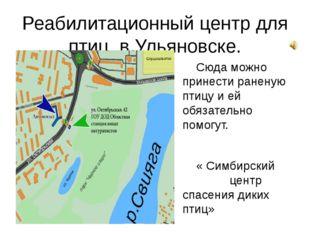 Реабилитационный центр для птиц в Ульяновске. Сюда можно принести раненую пти