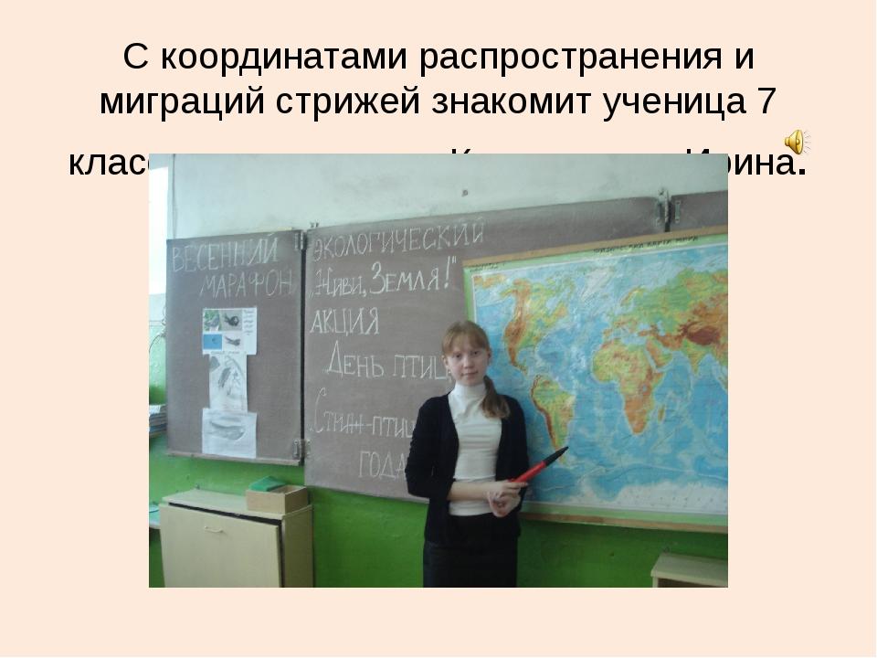 С координатами распространения и миграций стрижей знакомит ученица 7 класса К...